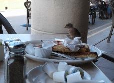 My breakfast companion.